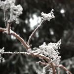 frost auf den pflanzen