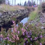 Der Causthaler Flutgraben
