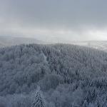 Winterwald im Harz