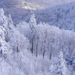 winterwald im südharz