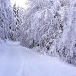 snowride trails