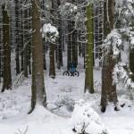 Winterzauber im Nationalpark Harz