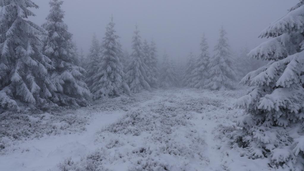 Der Nasse Weg im Harz