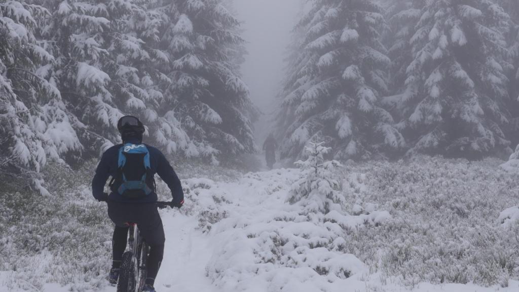 Tiefe Fichtenäste, schwer vom Schnee