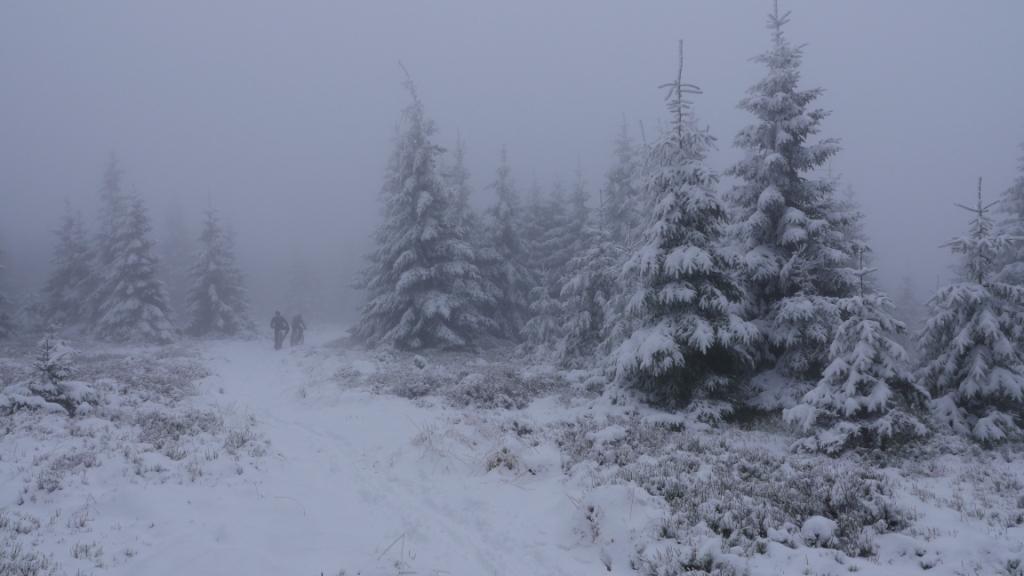 Harzer Trails