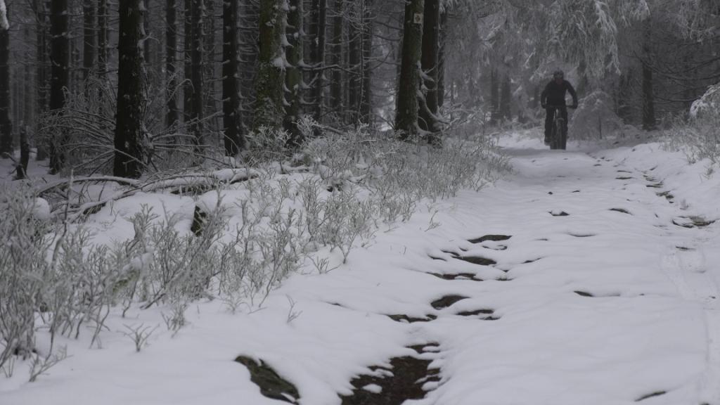 Singeltrailspaß im Harz