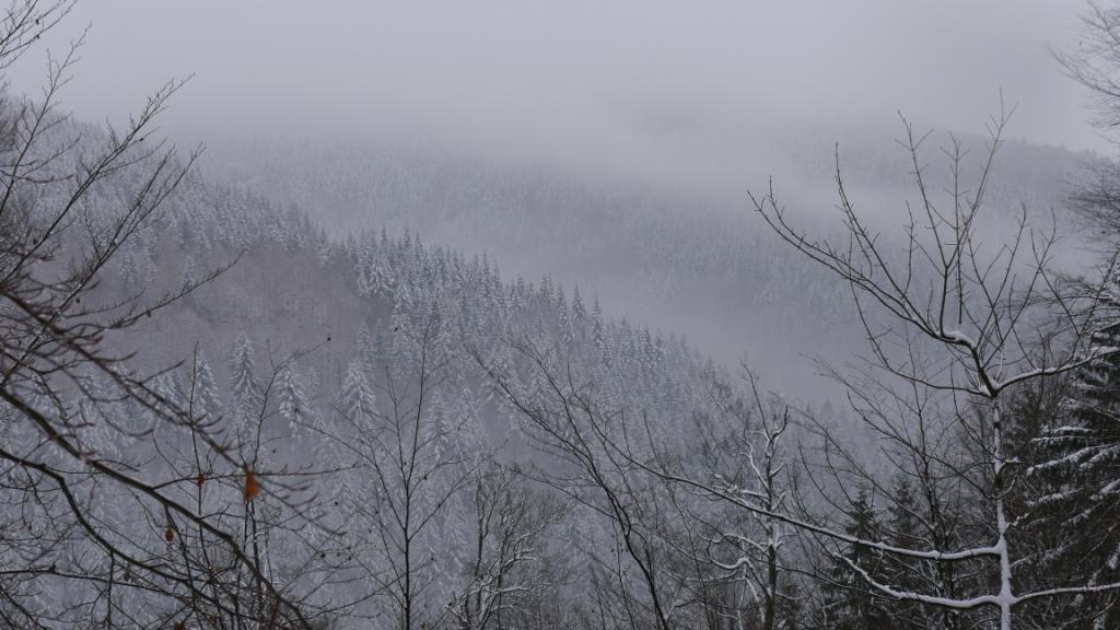 Der Nebel zieht herauf.